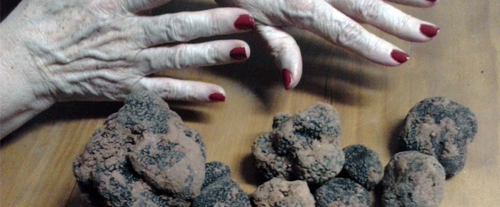 New Truffle Cannery in Alcarria Alta.